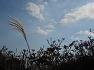자유분방한 산철쭉