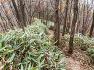 애기단풍 곱게 물든 전라북도 산림박물관 산책로와 내장산 장군봉을 걷다