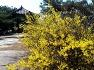 (익산여행)올 봄 벚꽃 여행은 온라인으로!  숨겨진 익산 벚꽃 명소 3곳을 소개합니다