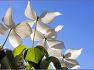 산딸나무 꽃/희망의 속삭임