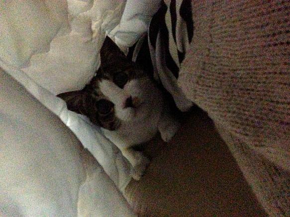 우리집 등골브레이커 고양이 미오