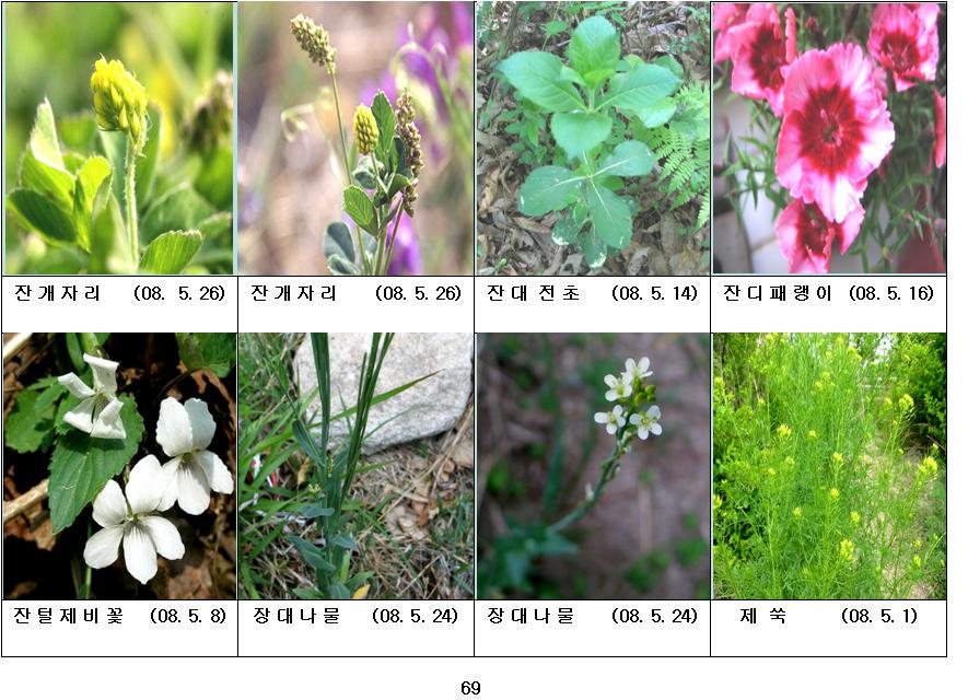 봄에 피는 야생화(5월-18)