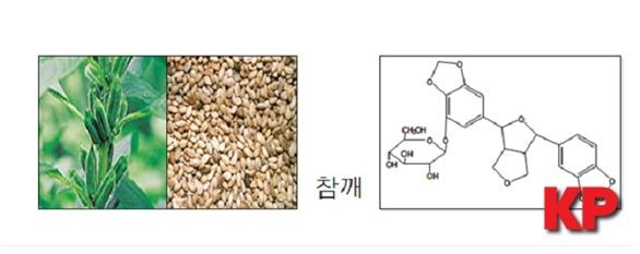 한국식품연구원, 참깨로부터 기억력 개선 효과 입증 및 기능성식품 원료 가능성 제시