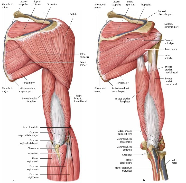 glenohumeral joint steroid injection